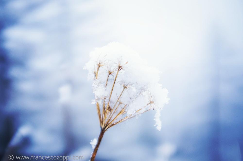 Snow and light