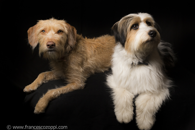Otto & Bina