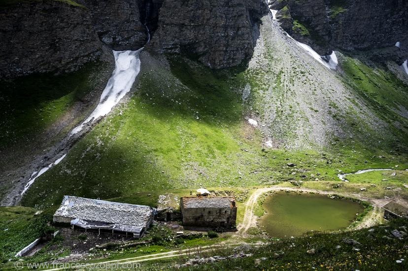De la vache à la fontine: Alpine pasture